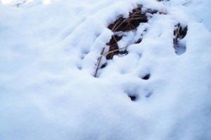 Geschichten zum Schnee