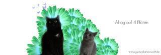 Tipps zur Katzenfotografie