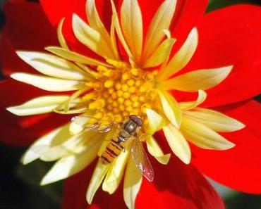 Pflanz-eine-Blume-Tag – der US-amerikanische National Plant a Flower Day