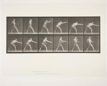 Boxen in der Kunst: Animal Locomotion, Tafel 344 von Eadweard Muybridge