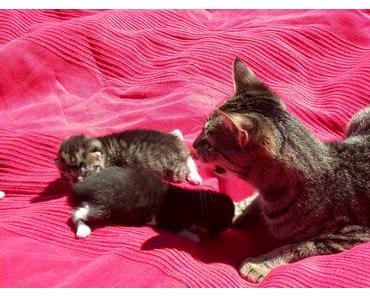 Foto: Katzenmama mit Nachwuchs