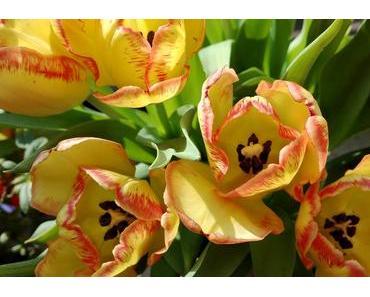 Foto: Ein Osterstrauß Tulpen