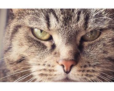 Die 10 schlimmsten Fehler bei der Katzenerziehung – und wie du es besser machen kannst