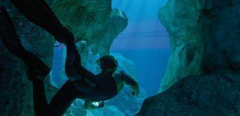 Top 5 Unterwasserfilme zum Start von 'Sanctum 3D'