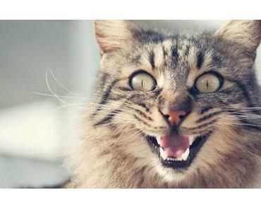 Deine Katze miaut ständig? Mit dieser Checkliste findest du die Ursache
