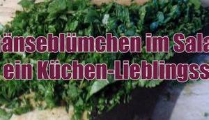 Gänseblümchen Salat Küchen-Lieblingsstück