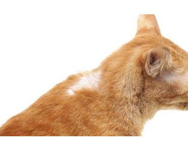 Kahle Stellen im Fell der Katze – Ursachen für Haarausfall bei Katzen