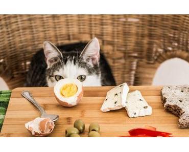Was dürfen Katzen nicht fressen? – Für Katzen giftige und unbekömmliche Lebensmittel