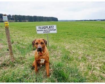 Der Westerwald-Steig mit Hund – Etappe 2
