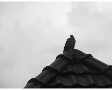 Foto: Taube auf dem Dachgiebel
