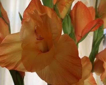 Foto: Lilien in Orange