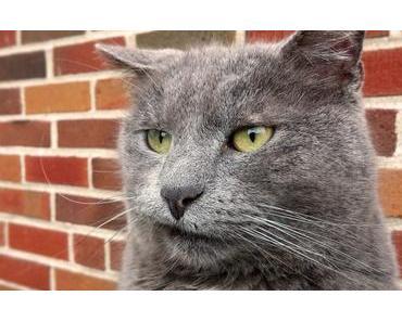 Verstopfung bei Katzen erkennen und handeln + Tipps zur Vorbeugung