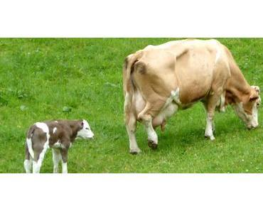 Weidetiere und Hunde – Richtiges Verhalten in den Bergen