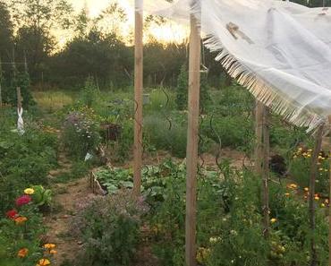 Das mit der Ernte aus dem eigenen Garten