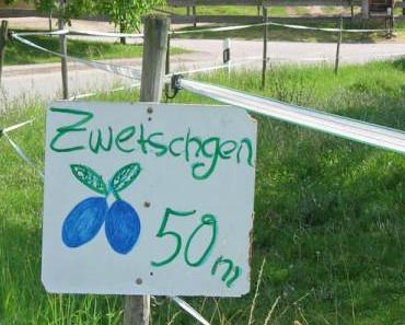 Zwetschgenzeit im Markgräflerland: Einfacher Hefeteig-Zwetschgen-Kuchen