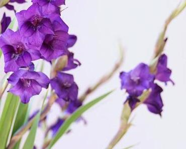 Friday-Flowerday 32/17