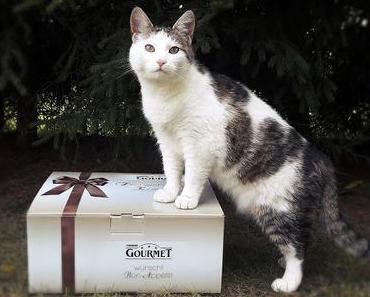 Katzenherzen schlagen höher: GOURMET geht wieder auf große Genusstour (Werbung inklusive Gewinnspiel)