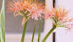 Friday-Flowerday 33/17