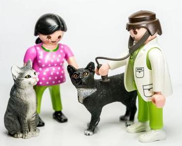 Lass-Deine-Katze-untersuchen-Tag – der amerikanische National Bring Your Cat to the Vet Day
