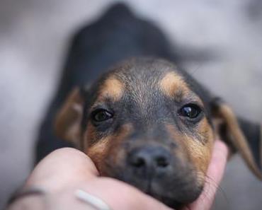 """Die """"Herzlich Willkommen – Diät"""" für den (Auslands)Tierschutzhund"""