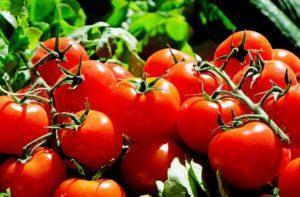 Tomaten leiden unter stark wechselnder Witterung