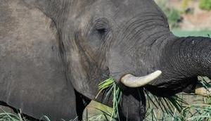 Reisefoto Woche: Beeindruckende Naturerlebnisse Botswana