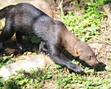 Manu Nationalpark im Amazonas von Peru
