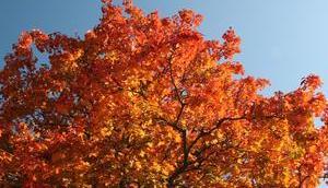 Foto: Heute kalendarische Herbstanfang