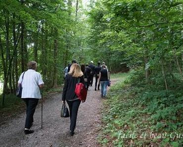 Friedwald in Heiligenberg am Bodensee