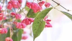 Friday-Flowerday 42/17