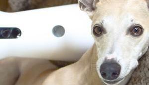 macht euer Hund, wenn nicht Zuhause seid? Furbo weiß schenkt euch Euro!