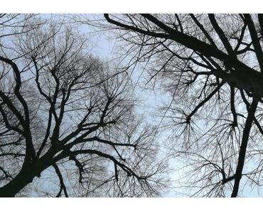 Foto: Die Linden sind jetzt nackt