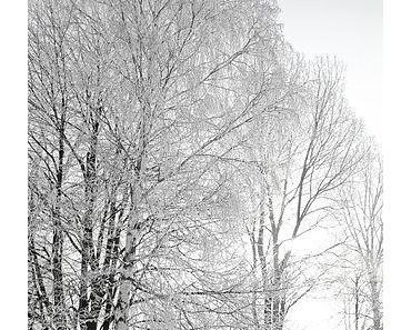Oh du komplizierter Winter