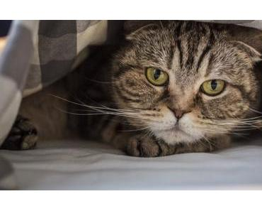 Deine Katze pinkelt ins Bett? Mögliche Ursachen und Lösungen