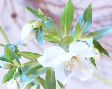 Friday-Flowerday 1/16