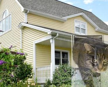 So kommt eure Katze sicher und alleine ins Haus ... vollautomatisch und von eurem Smartphone überwacht
