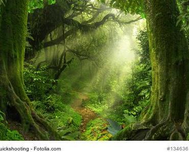 Das keltische Baumhoroskop und die Wanderlust