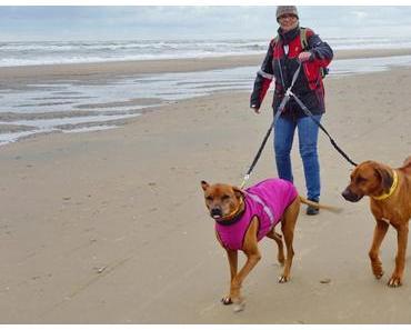 Persönlich getestet: Zwillingsleine für zwei Hunde