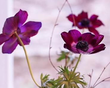 Friday-Flowerday 5/18