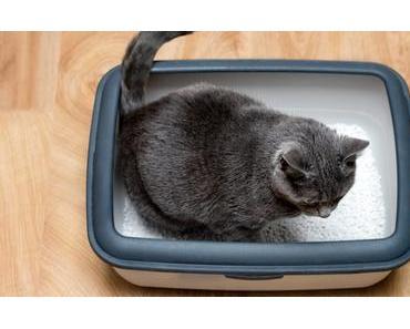 Blasenentzündung bei Katzen – Ursachen und Vorbeugung