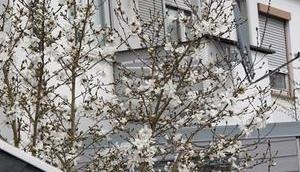 Frühling Haustür