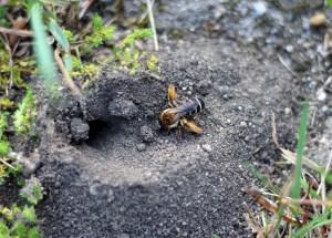 Insektenhotel – wie sie der Natur etwas zurückgeben können