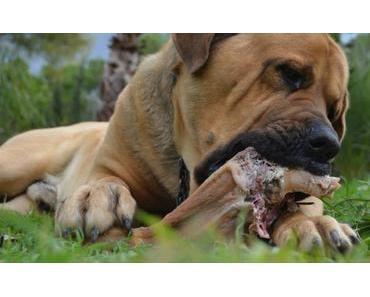 1 Hundejahr = 7 Menschenjahre – ein Mythos