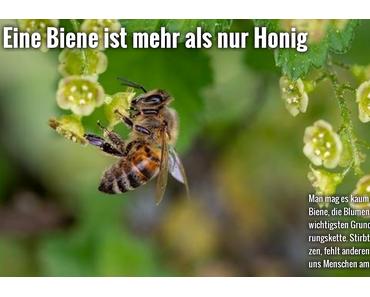 Eine Biene ist mehr als nur Honig. #Bienensterben #Bienen #Honig #Umwelt