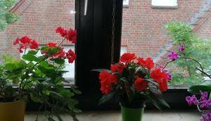 Foto: Blumen Fensterbank