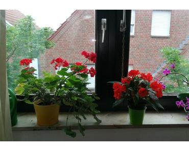 Foto: Blumen auf der Fensterbank
