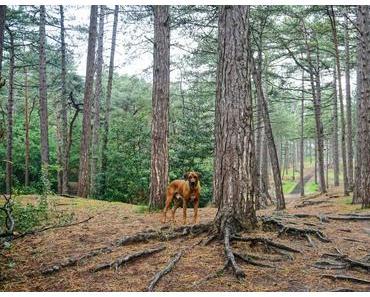 Dayos Gedanken – auf Texel gibt es auch Wald!