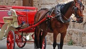Kutsch-Pferde leider unter hohen Temperaturen