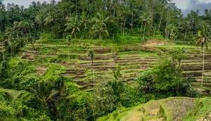 Indo-Quickie Teil Ubud Umgebung
