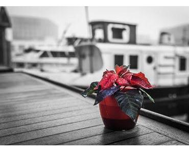 SEINSORIENTIERTE KÖRPERTHERAPIE (244): Die Poesie der Liebe und mein Weg dorthin